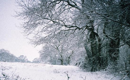 Ottery St. Mary, UK: Winter near Mazzard Farm