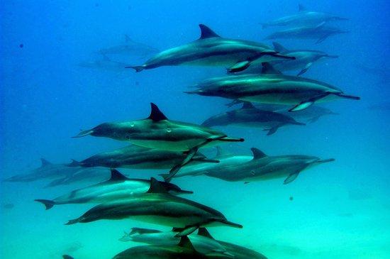 Dolphin Excursions Snorkel Adventure