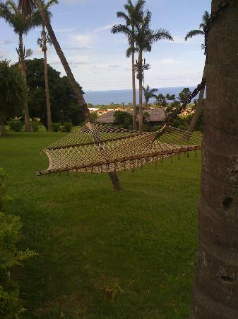 Ottley's Plantation Inn : Time to relax...