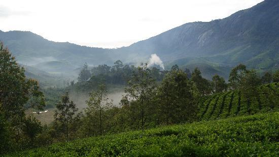 Pavithram Home Stay: The Tea garden