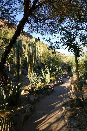 The Phoenician, Scottsdale: a stroll through the cactus garden