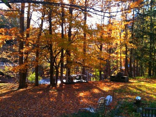 Chichester Yoga: Chichester in Autumn