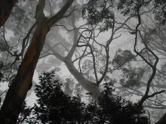 Kodaikanal, Indien: amidst mist
