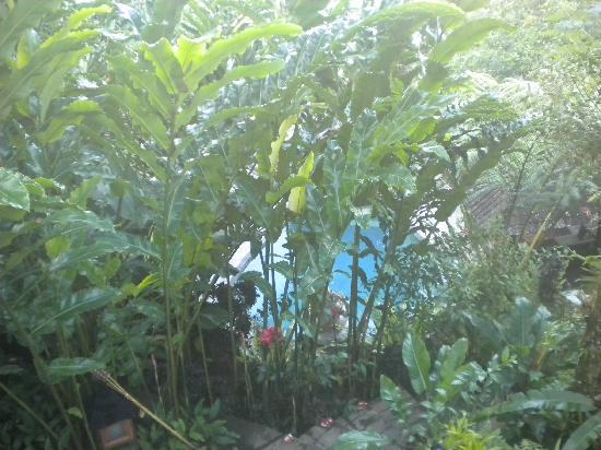 Villa Sarna Ubud: glimpse of the pool