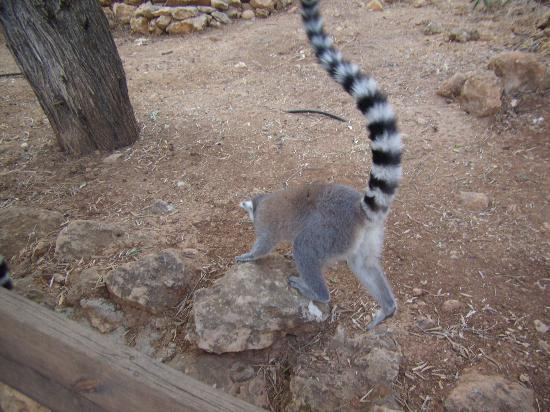 Tisch Family Zoological Gardens (Biblical Zoo): the lemurs were exciting