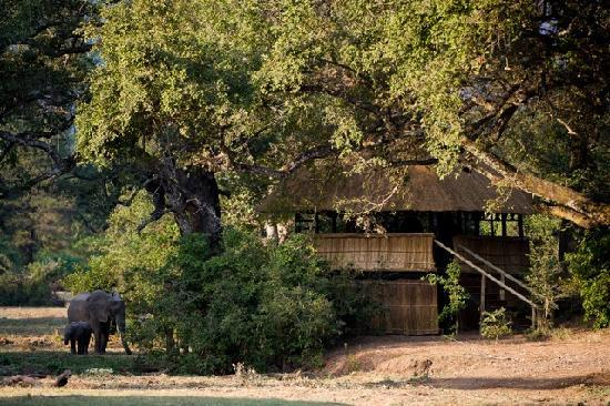 Chamilandu Bushcamp - The Bushcamp Company: The Hide at Chamilandu Bushcamp, a great place to watch elephants in the South Luangwa, Zambia