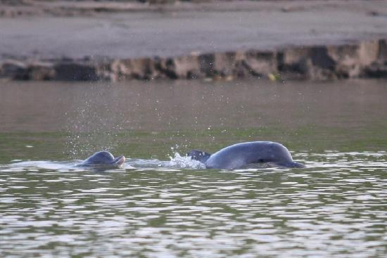 Otorongo Expeditions Jungle Lodge: River dolphins!