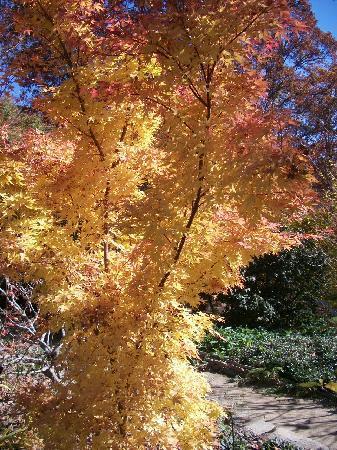 The North Carolina Arboretum: beautiful fall colors