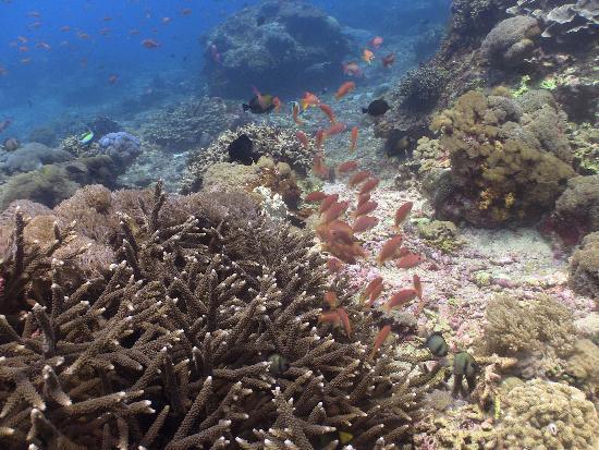 Big Fish Diving: reef