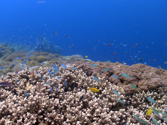 Nusa Lembongan, Indonesia: reef scene and blue water