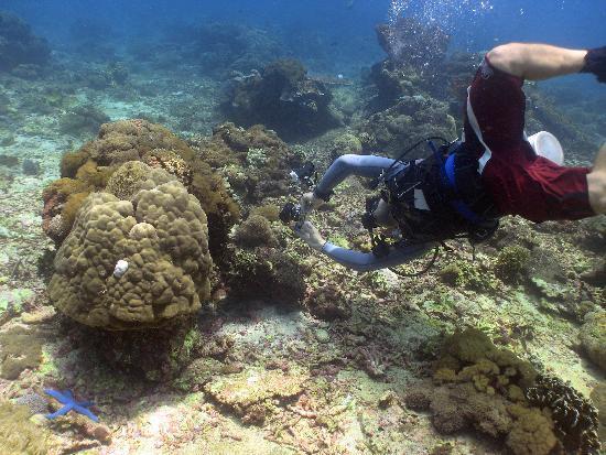 Big Fish Diving: Tim