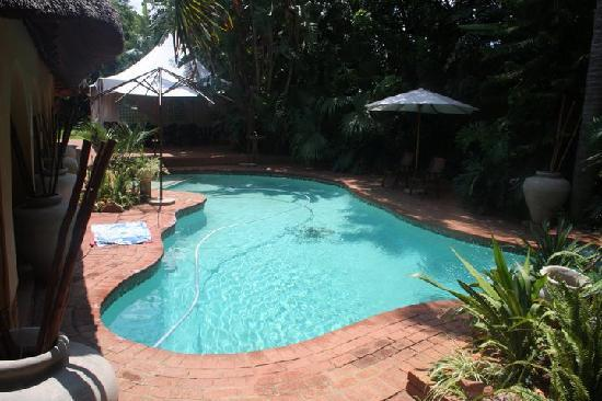 Bohemian Rhapsody Guest House  &  InnTshwane Lodge: The pool