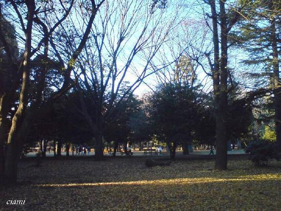 Shibuya, Japan: 代々木公園1
