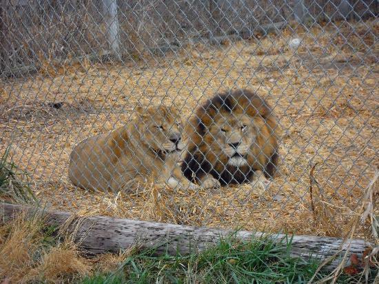 Exotic Feline Rescue Center: Lovely Couple