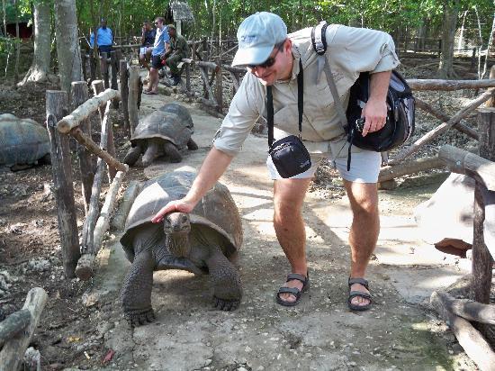 Dongwe Ocean View: Turtles in Prison isle