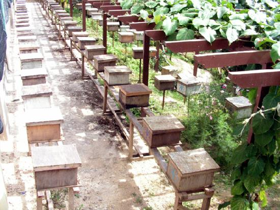 Ee Feng Gu Bee Farm: Wooden boxes as beehives.