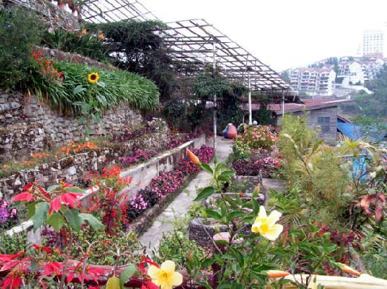 Rose Centre: Layered Gardens.