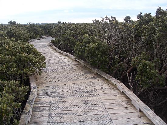 Phillip Island, Australia: Mangroves boardwalk