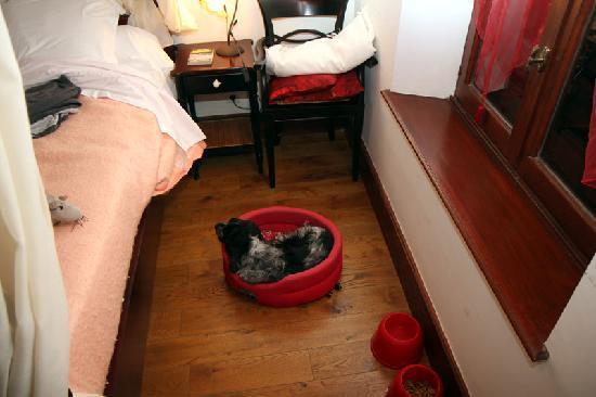 Hotel Costes: Animaux admis à l'hôtel.