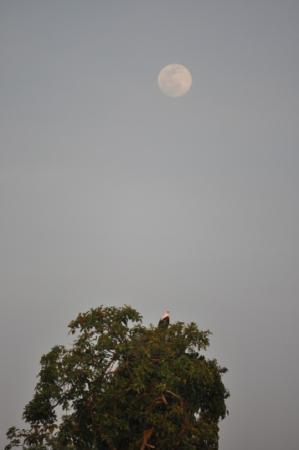 Wildwaters Lodge: Moonrise and fish eagle
