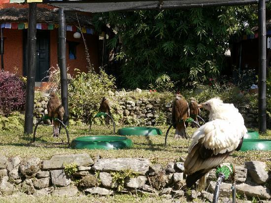 Maya Devi Village: The birds