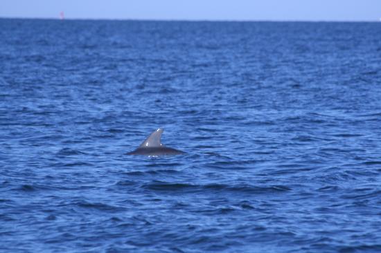 Boca Grande, FL: Dolphin
