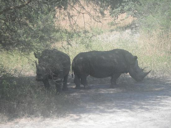 Kololi, Gambie : Rhino
