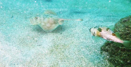 Aquatic Sports and Adventures: Puffer and Ray