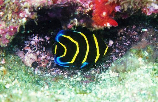 Aquatic Sports and Adventures: Top shot, vibrant color!