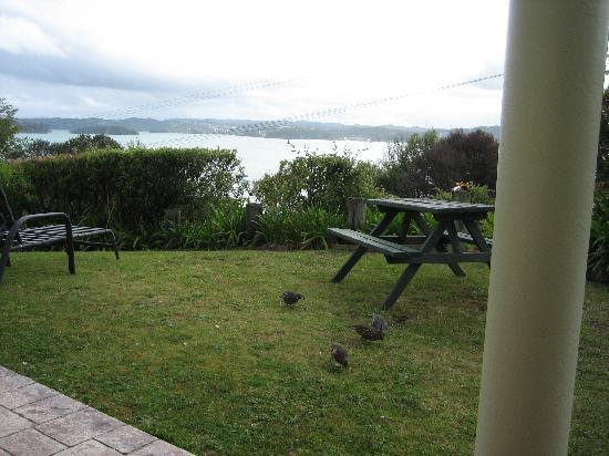 Bay View Apartment : Quail on the Lawn outside accommodation