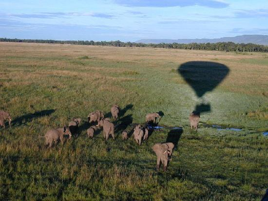 Governors' Balloon Safaris: Flying over Elephants