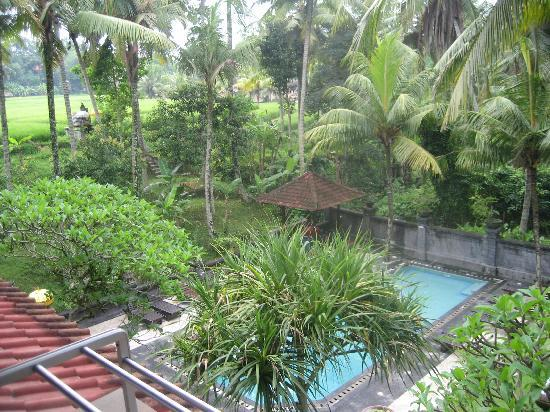 Artini 3 Cottages : View from our room - pool and paddy fields beyond.