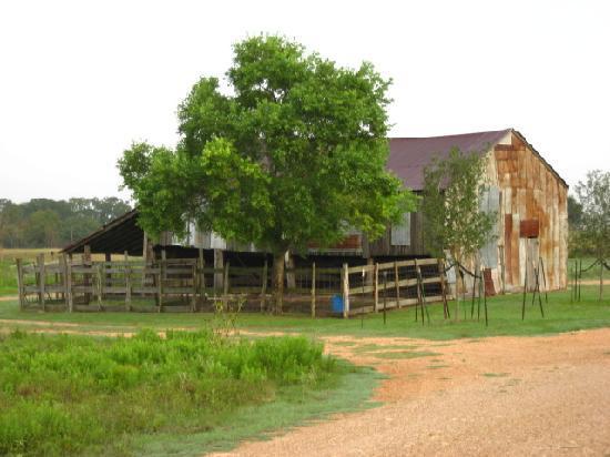 Murski Homestead B&B: Old Murski Barn