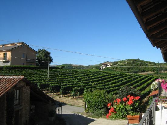 Agriturismo Ca Trinche: Rebberg mit Moscato Trauben von ORnella & Cesare