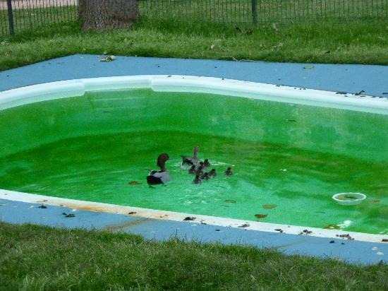 Takaru Bush Resorts Grampians: ducks living on the green pool