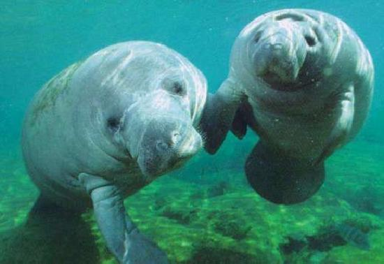 Chankanaab Beach Adventure Park: We learned some surprsing things about the manatee.