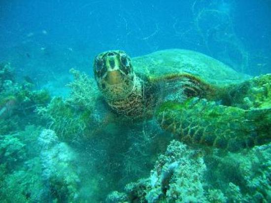 Turtle at Krabi dive site