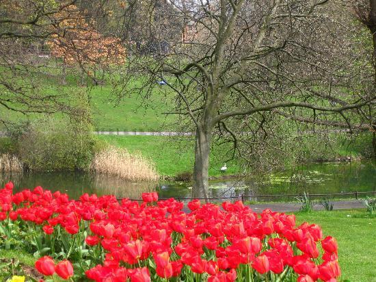 ดับบลิน, ไอร์แลนด์: Phoenix Park in Dublin
