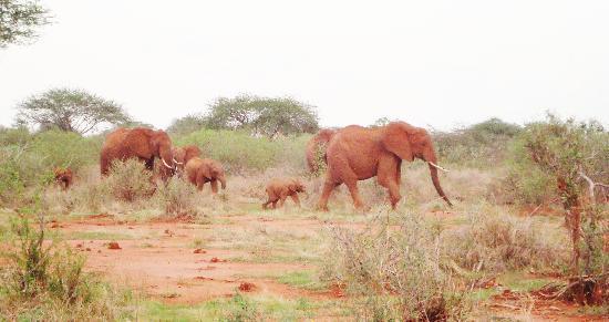 Safari Kenya Watamu - Day Tours: stupendi i cuccioli..stupendi i colori