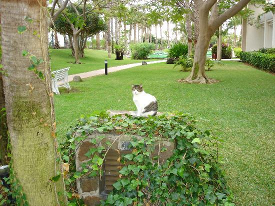 Tabaiba Princess: One of many cats