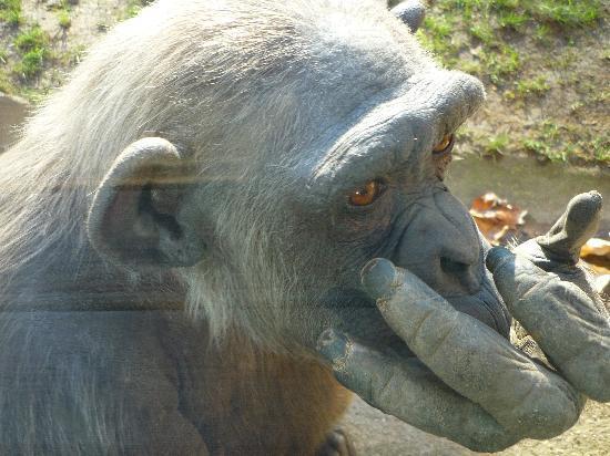 Zoo de Barcelona: singe