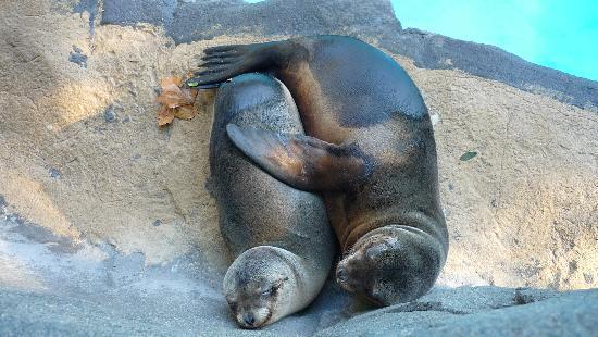 Zoo de Barcelona: phoque