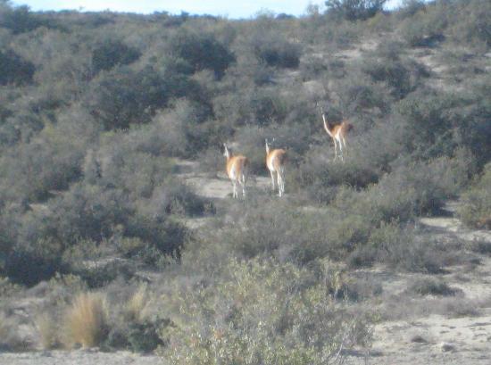 Puerto Madryn, Argentina: Die ersten Tiere!