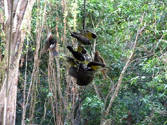 La Koumbala: les sucriers gourmands