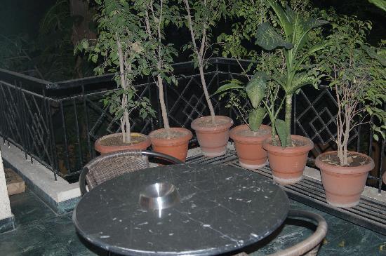 Saubhag Bed and Breakfast: Outdoor patio