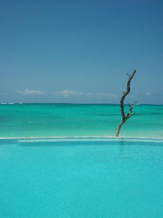 Pongwe Beach Hotel: Infinity pool