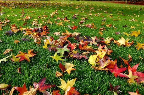 Michaelsberg : le foglie sul prato del parco