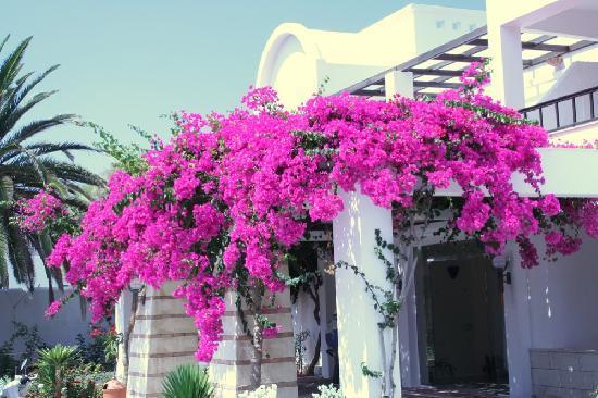Kokkini Hani, Griekenland: Entrée de l'hôtel