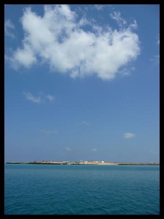 île de Moucha (30 minutes de bateau depuis Djibouti)