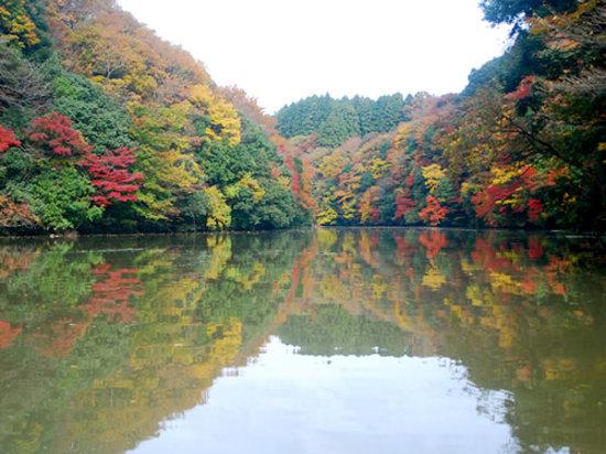 Kimitsu, Japan: 2010.11.25に亀山湖で撮影しました。